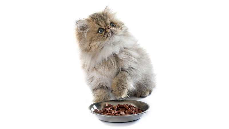 food for cat constipation