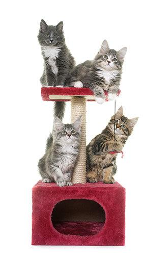 simple cat tower