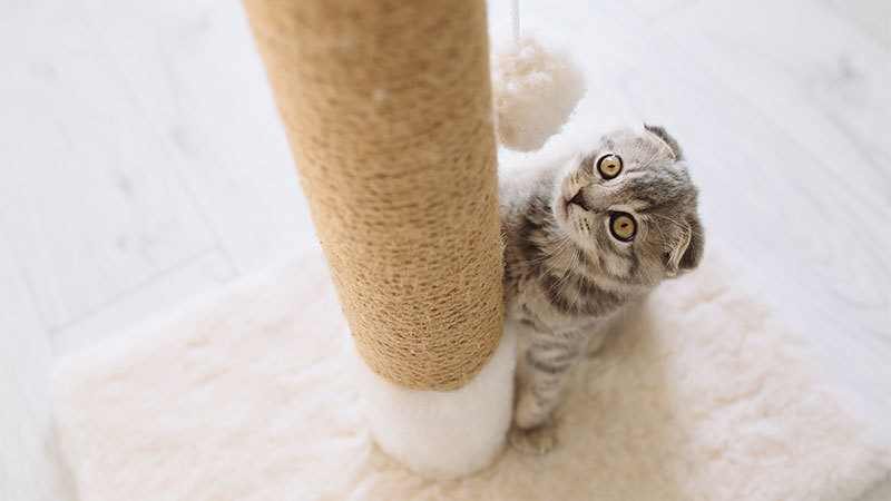 how to replace sisal rope on a cat tree