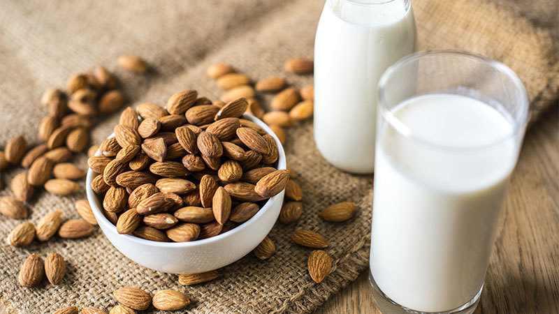 is almond milk safe for a kitten?