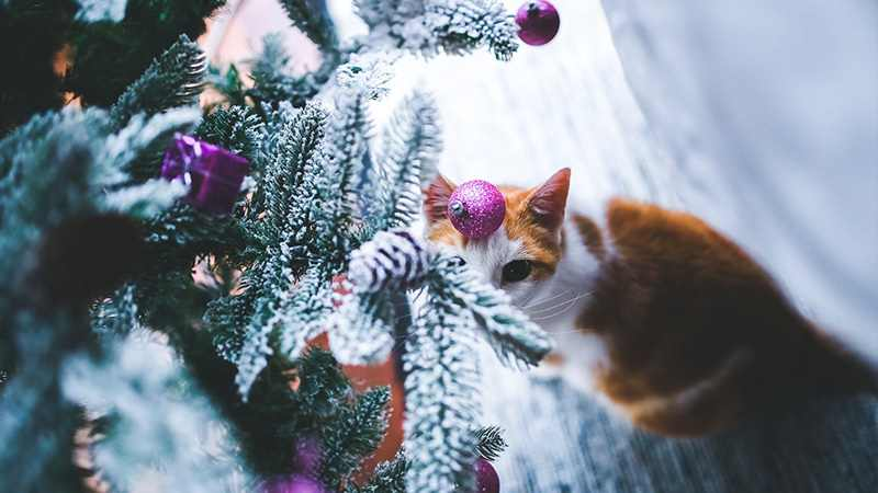 how to keep cat out of christmas tree