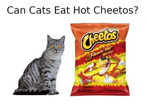 CAN CATS EAT HOT CHEETOS