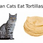 Can Cats Eat Tortillas? - All You Need To Know