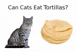 CAN CATS EAT Tortillas
