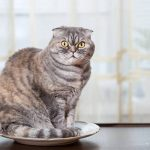 Can Cats Be Schizophrenic? - Interesting Facts