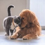 Can Cats Get Roundworms From Dogs?