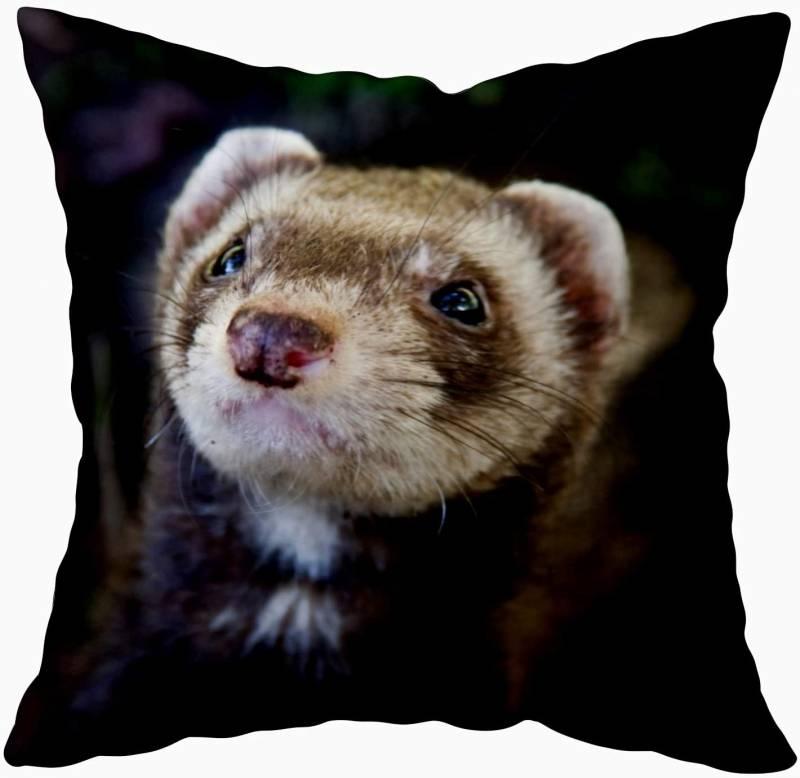 Capsceoll Throw Pillow Cases, Pet Ferret 18x18 Pillow Cover