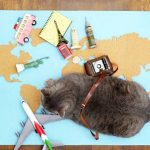 How Do Cats Go To The Bathroom On A Plane? - All You Need To Know