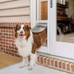 Best 6 Dog Door For Sliding Glass Door (Reviews) - Our Top Picks