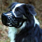 Best 5 Dog Muzzles For Training (Review) - Trainer's Top Picks
