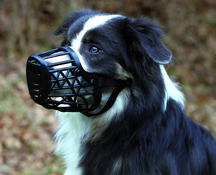 Trixie Plastic Dog Muzzle with Snout Nylon Strap