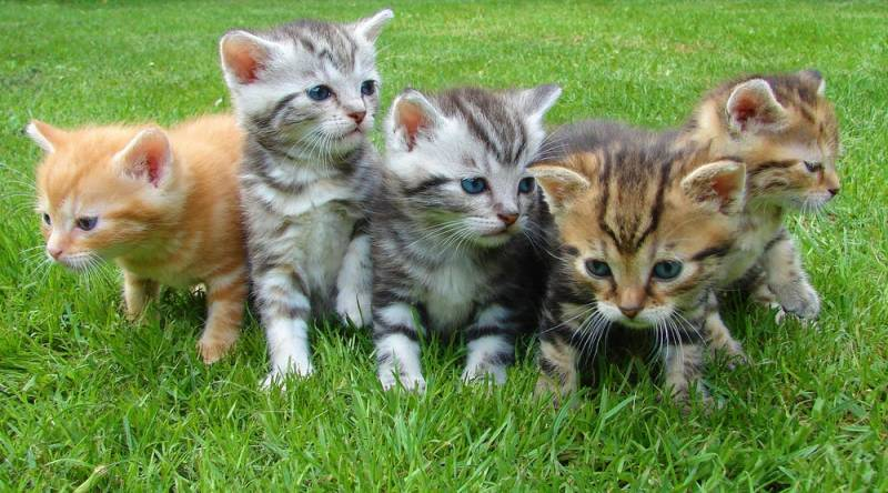 how many cats can you have in your home legally