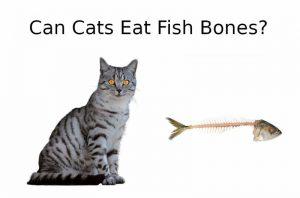 CAN CATS EAT Fish Bones