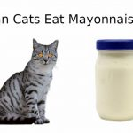 Can Cats Eat Mayonnaise? - Things You Should Know