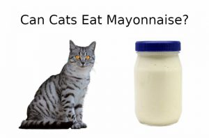 CAN CATS EAT Mayonnaise