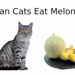 Can Cats Eat Melon? - Cat Nutrition Facts