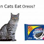 Can Cats Eat Oreos? - Nutritional Advice