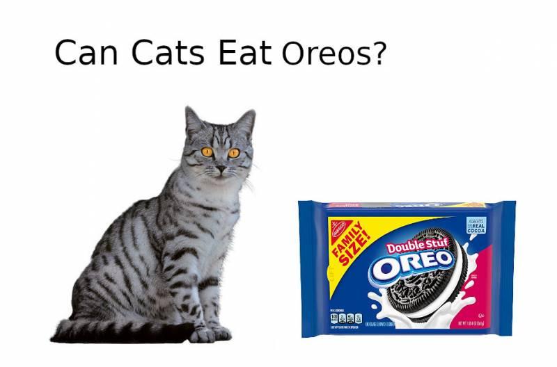 CAN CATS EAT Oreos