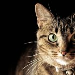 Can Cats Be Afraid Of The Dark? - Interesting Facts