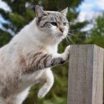 How Do Cats Retract Their Claws?