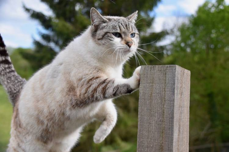 How Do Cats Retract Their Claws