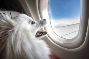 How do dogs travel on planes