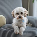 How Do Dogs Adapt To Their Environment?