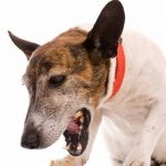Why Is My Dog Is Coughing And Gagging?