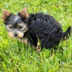 Why Will My Dog Not Poop Outside? - 8 Reasons