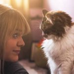 Why Is My Cat Kneading My Face? - 6 Common Reasons