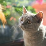 Why Is My Cat Small For Its Age? - 6 Reasons Explained