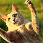 Why Can't My Cat Retract Its Claws?