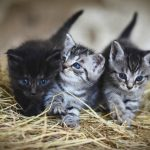 How Long Can Newborn Kittens Survive Without Their Mother?