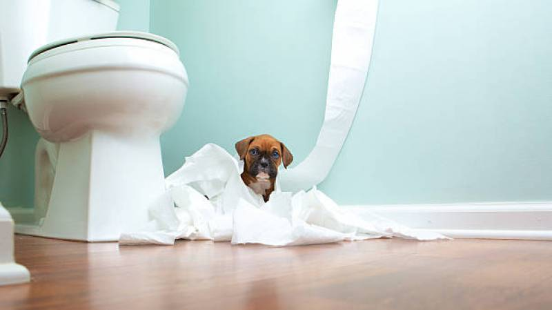 leaving dog in bathroom while at work is It a good idea?