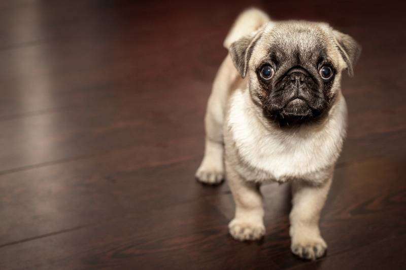 how hard is it to raise a puppy all you need to know