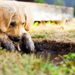 When Does Having A Puppy Get Easier? - Owner's Guide
