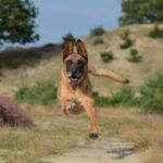 6 Ways To Stop Dog Jumping Up When Out Walking