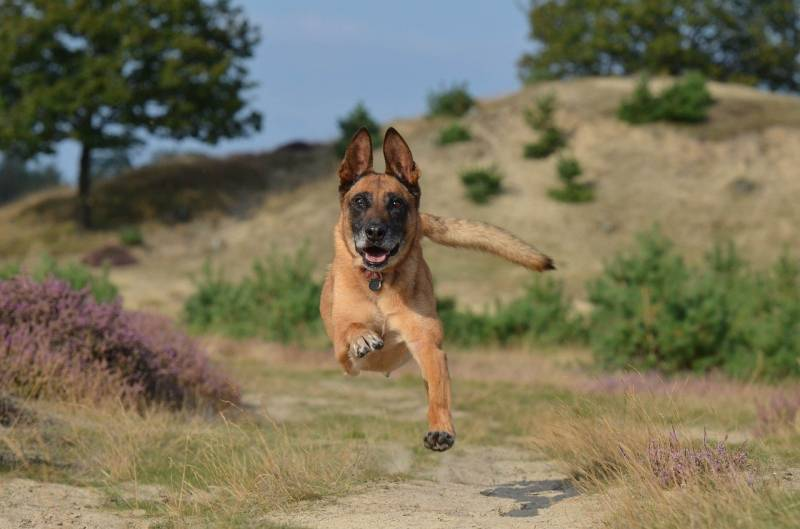 Different ways to teach dog how to stop Jumping up when out walking