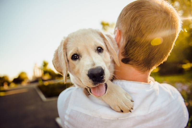 Do you feel that your puppy is excessively attached to you?