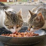 How Often Should A Cat Poop On Wet Food?