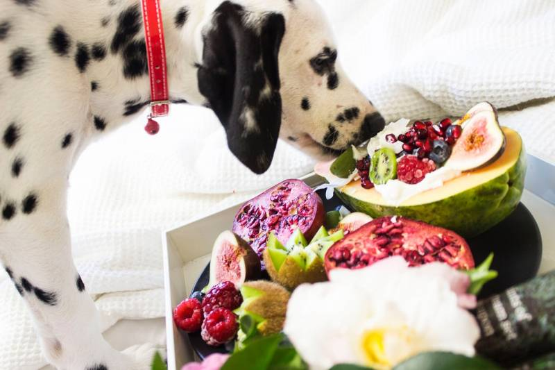 How to Fatten Up a Dog On Raw Diet