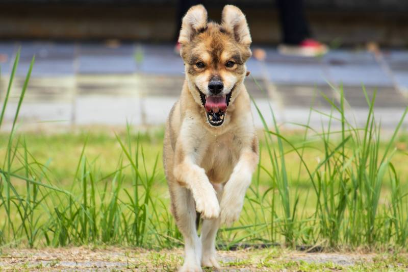 How to stop dog jumping up when out walking