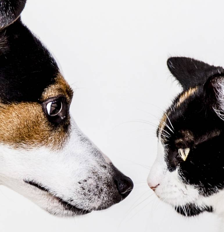 What to do if your cat hates your dog