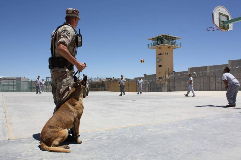 How Do Police Dogs Get Paid?
