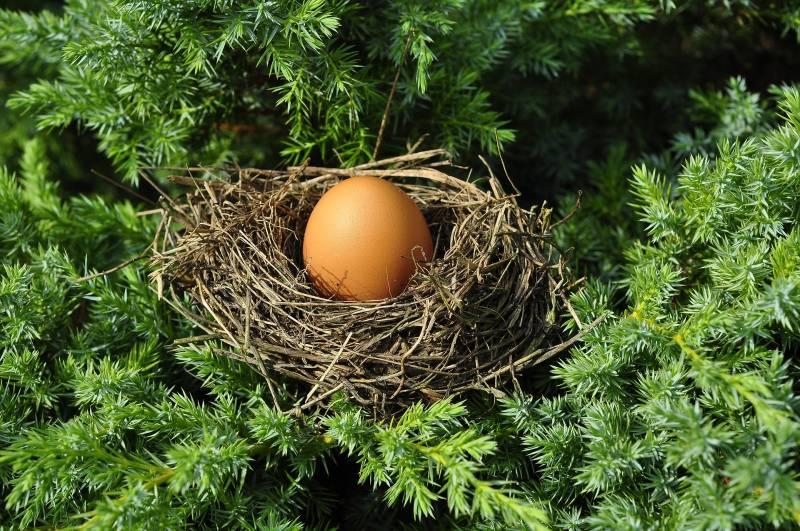 Reasons Why Do Baby Birds Die in Nest