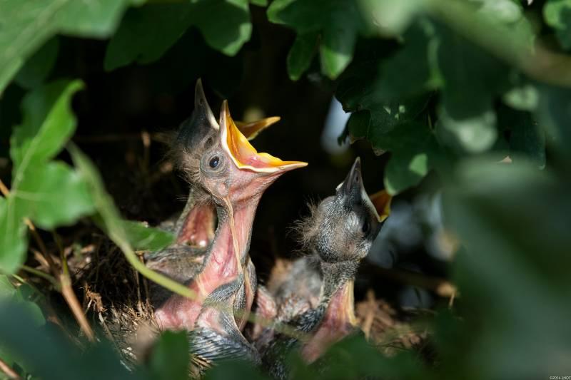 Why Do Baby Birds Die in Nest