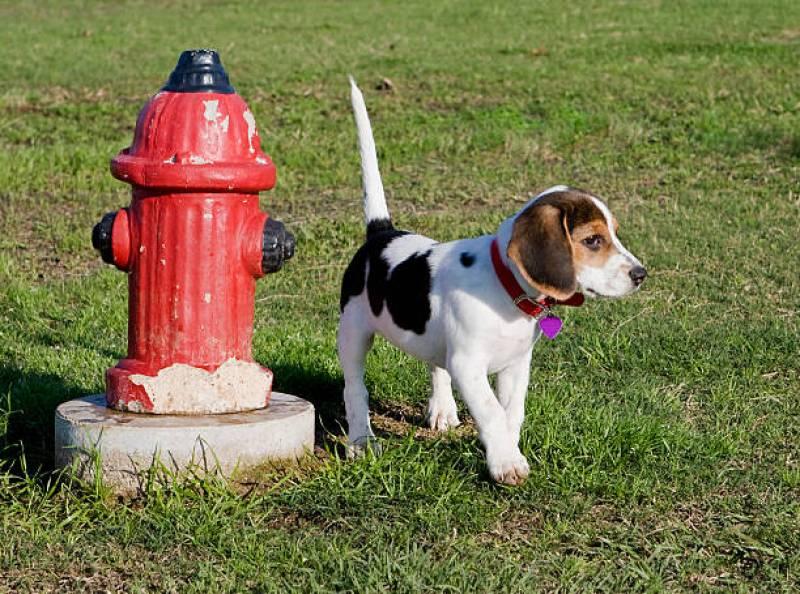 Why Do Dogs Like Fire Hydrants