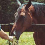 Why Do Horses Eat Hay?