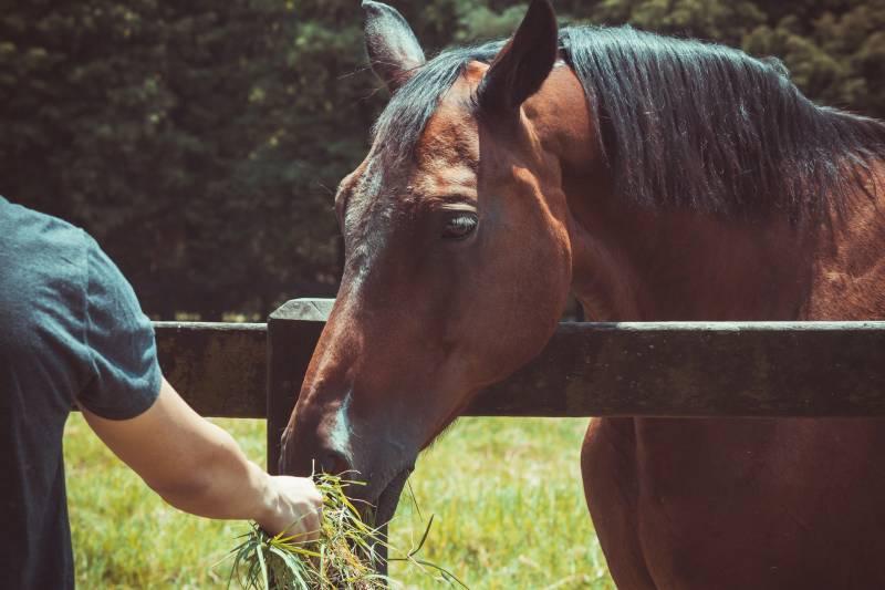 Why Do Horses Eat Hay