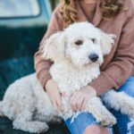 I Love My Dog So Much It Hurts - Why?